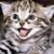 Logo Meow! - La stanza dei gatti