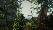 Immagine The Forest PlayStation 4